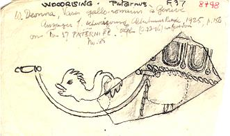 Drawing of a piece of Roman Samian pottery from Wood Rising villa, Cranworth.