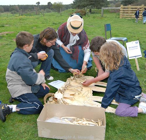 Fluffy the sheep bone jigsaw in use during the East Wretham Heath Open Day in Autumn 2006