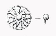Drawing of a Middle Saxon 'rune disc' from Keswick. The Anglo-Saxon runes read TLIMSUDN. It is not clear what they mean.