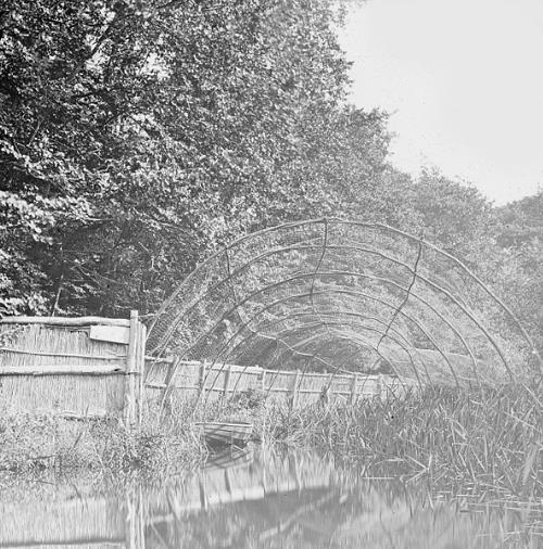Photograph of Fritton Decoy pond. From Picture Norfolk.