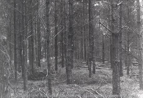 Photograph of the earthworks of a Neolithic long barrow in Felthorpe.