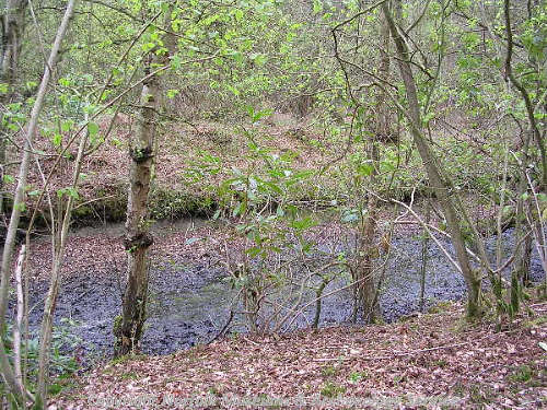The medieval moat within Hockering Wood