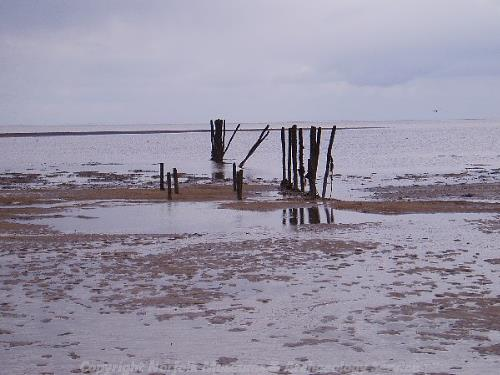 Group of timber posts recorded during the Norfolk Rapid Coastal Survey in 2004.